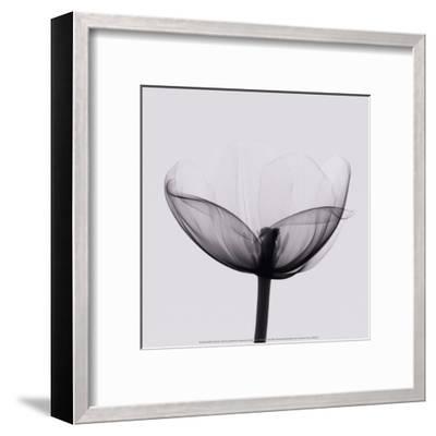 Opening-Marianne Haas-Framed Art Print