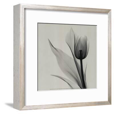 Tulip-Marianne Haas-Framed Art Print