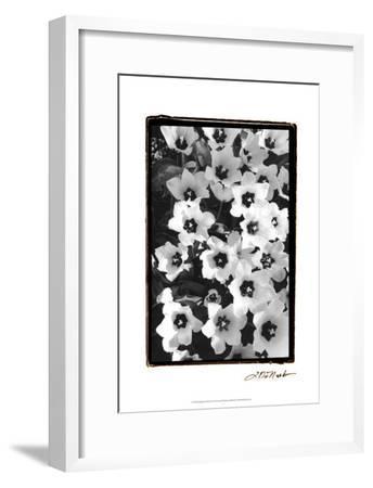 Springtime Garden II-Laura Denardo-Framed Art Print