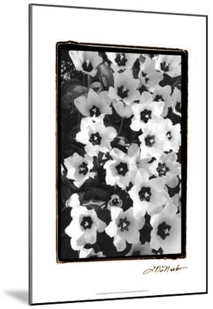 Springtime Garden II-Laura Denardo-Mounted Art Print