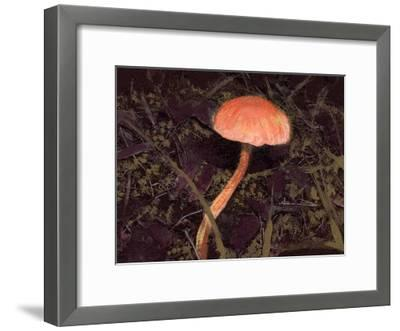 Forest Floor III-Alicia Ludwig-Framed Art Print