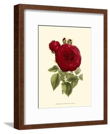 Magnificent Rose I-Ludwig Van Houtte-Framed Art Print