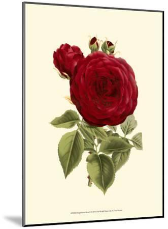 Magnificent Rose I-Ludwig Van Houtte-Mounted Art Print