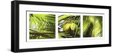Palm Leaves-Philip Plisson-Framed Art Print