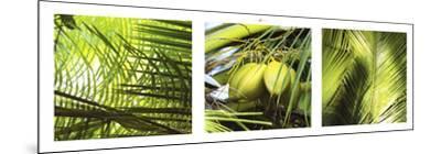 Palm Leaves-Philip Plisson-Mounted Art Print