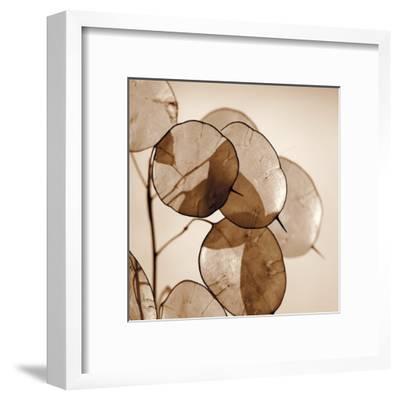 Silver Dollars-Ann Dahlgren-Framed Art Print