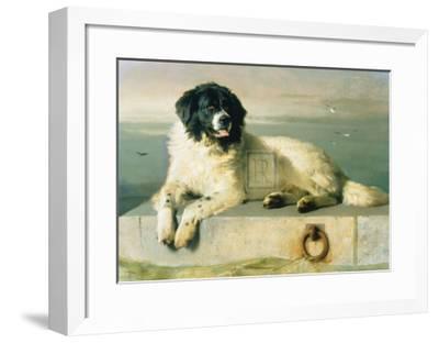 A Distinguished Member Of The Humane Society-Edwin Henry Landseer-Framed Art Print