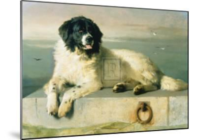 A Distinguished Member Of The Humane Society-Edwin Henry Landseer-Mounted Art Print