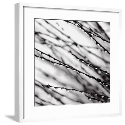 Jewel Drops-David Gray-Framed Art Print