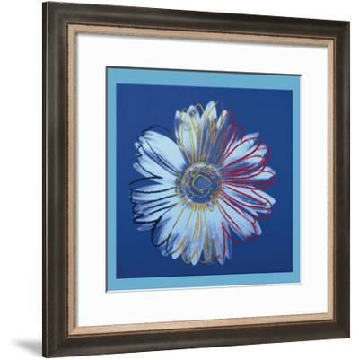 Daisy, c.1982 (Blue on Blue)-Andy Warhol-Framed Giclee Print
