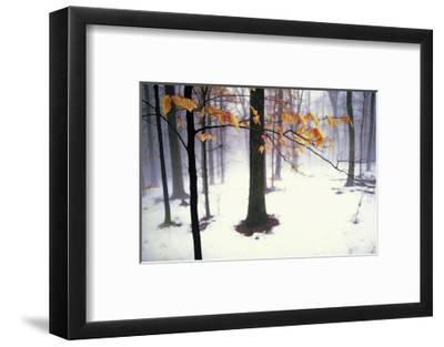 Quiet Woods-David Winston-Framed Giclee Print