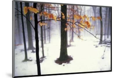 Quiet Woods-David Winston-Mounted Giclee Print