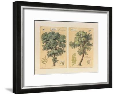 Frêne et Accacia-Laurence David-Framed Art Print