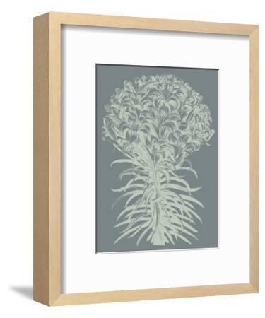 Lilies, no. 7-Botanical Series-Framed Giclee Print