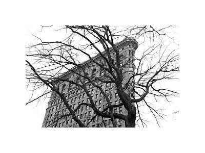 Flatiron with Tree-Erin Clark-Framed Giclee Print
