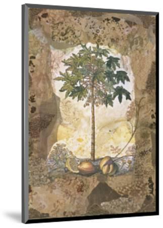Lace and Papaya-David Hewitt-Mounted Giclee Print