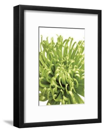 Green Bloom V-Jenny Kraft-Framed Giclee Print