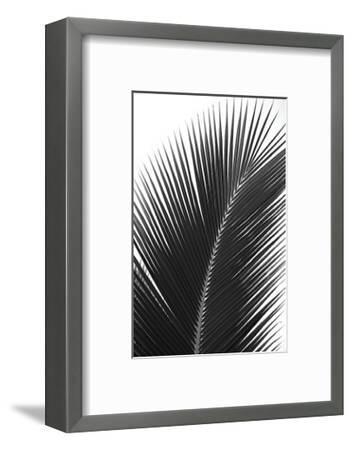 Palms, no. 14-Jamie Kingham-Framed Giclee Print