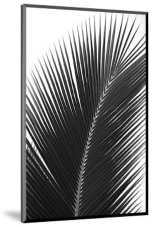 Palms, no. 14-Jamie Kingham-Mounted Giclee Print