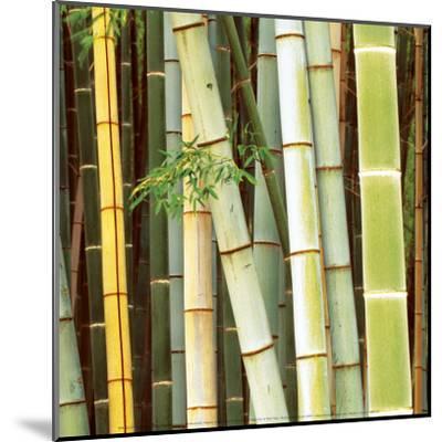 Bamboos Forest, Sagano, Kyoto, Japan-Rob Tilley-Mounted Art Print