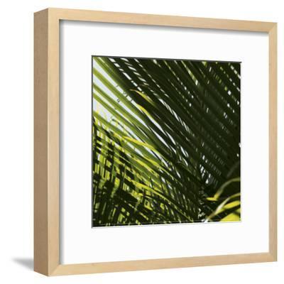Palm Trees, Dominican Republic, Punta Cana-Lisa S^ Engelbrecht-Framed Art Print