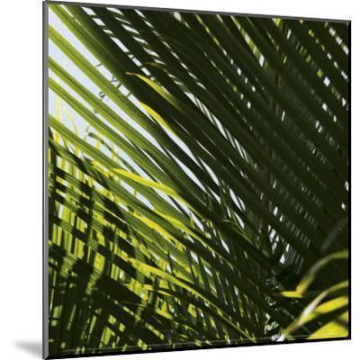 Palm Trees, Dominican Republic, Punta Cana-Lisa S^ Engelbrecht-Mounted Art Print