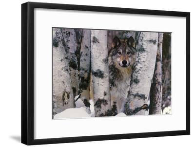 Mountain Ranger-Art Wolfe-Framed Art Print