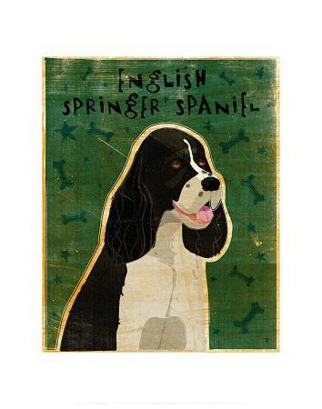 English Springer Spaniel (black and white)-John Golden-Framed Art Print