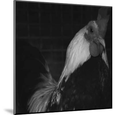 The Rooster-Carl Ellie-Mounted Art Print