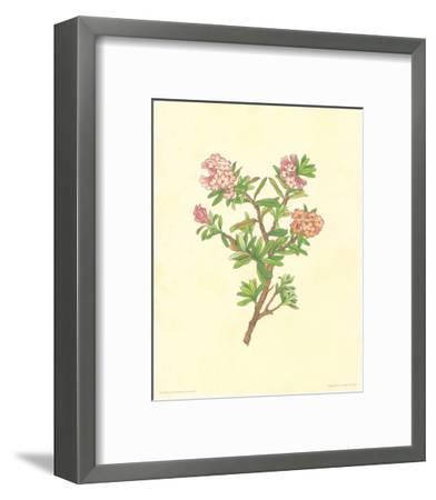 Flore Alpine IV- Vannter & Kunstv-Framed Art Print