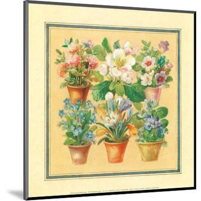 Flower IV--Mounted Art Print