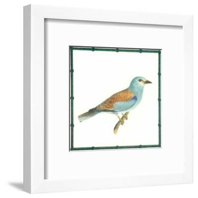 Ornitologica III--Framed Art Print