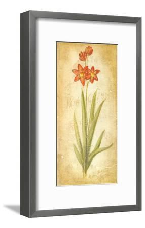 Ixia Grandiflora-Roberta Ricchini-Framed Art Print