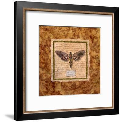 Manduca Moth-Abby White-Framed Art Print