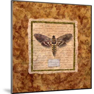 Manduca Moth-Abby White-Mounted Art Print