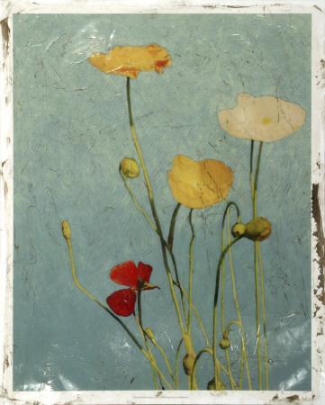 Embellished Poppies I-Chariklia Zarris-Framed Giclee Print