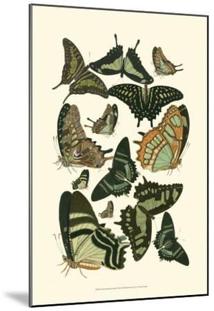 Green Butterfly Study--Mounted Art Print