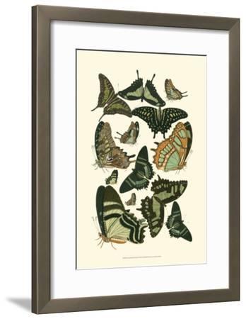 Green Butterfly Study--Framed Art Print