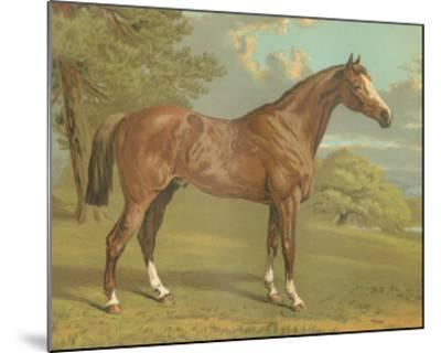 Cassell's Thoroughbred I-Cassell-Mounted Giclee Print