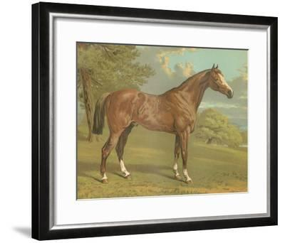 Cassell's Thoroughbred I-Cassell-Framed Giclee Print