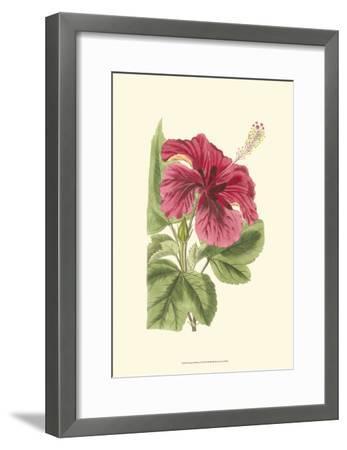 Antique Hibiscus I-Drake-Framed Art Print