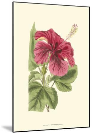 Antique Hibiscus I-Drake-Mounted Art Print