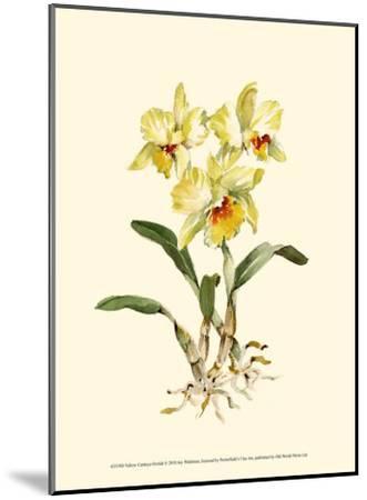 Yellow Cattleya Orchid-Joy Waldman-Mounted Art Print