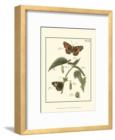 Butterfly Metamorphosis I--Framed Art Print