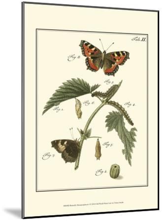Butterfly Metamorphosis I--Mounted Art Print