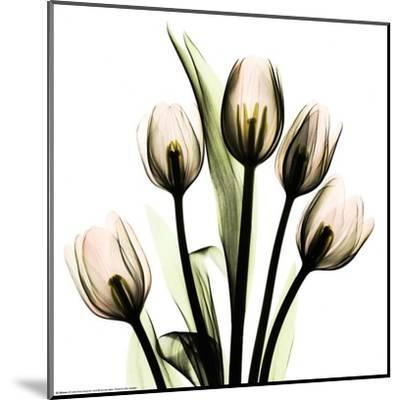 Crystal Flowers X-ray, Tulip Bouquet-Albert Koetsier-Mounted Art Print