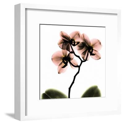 Crystal Flowers X-ray, Orchid-Albert Koetsier-Framed Art Print