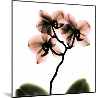 Crystal Flowers X-ray, Orchid-Albert Koetsier-Mounted Art Print