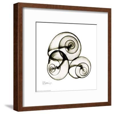 X-ray Snail Shells, Sepia-Albert Koetsier-Framed Art Print