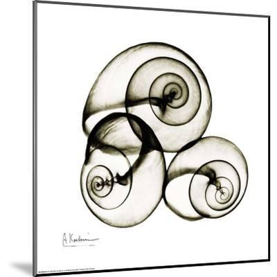 X-ray Snail Shells, Sepia-Albert Koetsier-Mounted Art Print